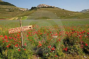 15280693_foto-della-fioritura-2011-di-norcia-1